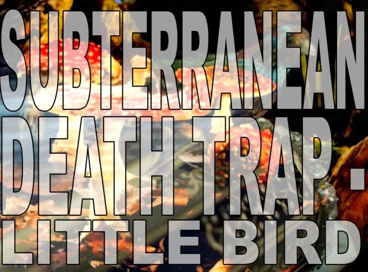 Little-Bird-WS